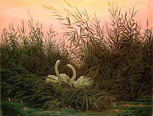 Caspar David Friedrich - Swans in the reed