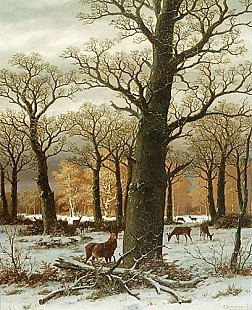 Caesar Bimmermann - Red deers in a winterly oak forest