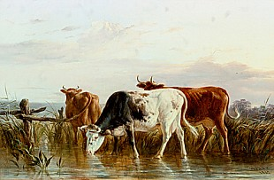 Henry Park - Cows at a reedy waterside