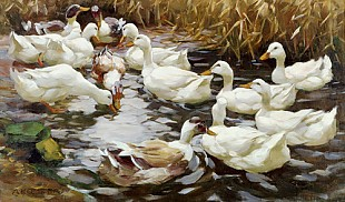 Alexander Koester - Ducks between reed at a pond