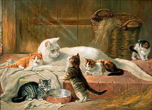 Julius Adam - cat family