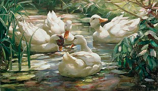 Alexander Koester - Ducks in a pond in the wood