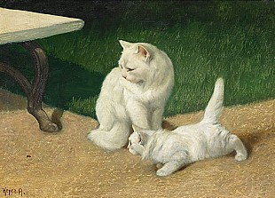 Arthur Heyer - Angora cats