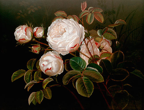 Johan Laurentz Jensen - Still life with blooming white roses
