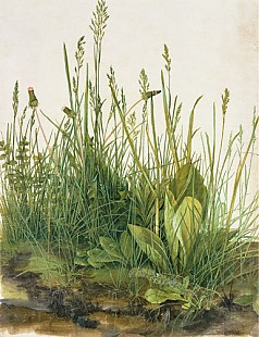 Albrecht Dürer - The huge turf