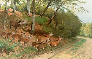 Christian Kröner - Deer and pride while crossing a forest track
